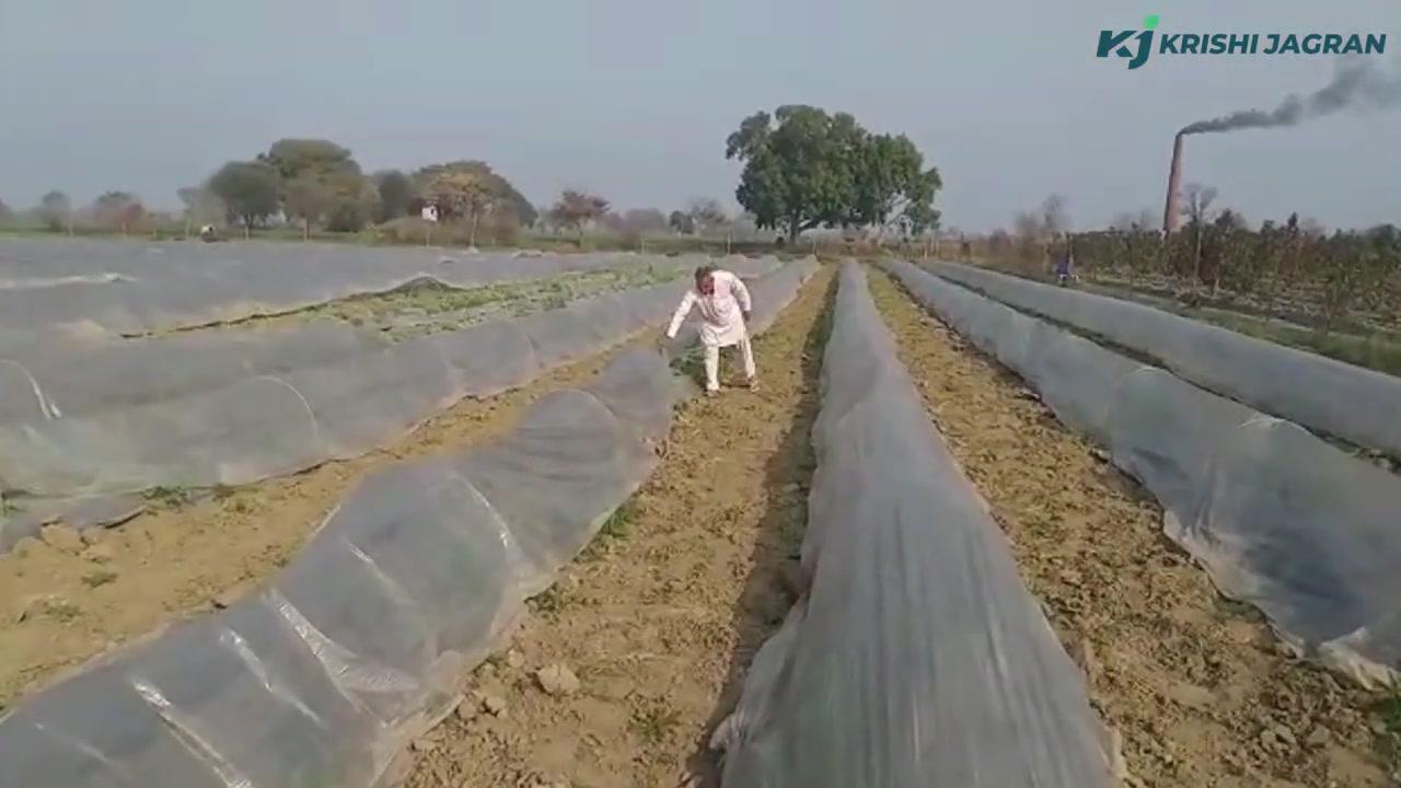 खरबूजे की खेती कर 60 दिनों में हो जाएं मालामाल   Muskmelon's Farming   Ramesh Shrivas